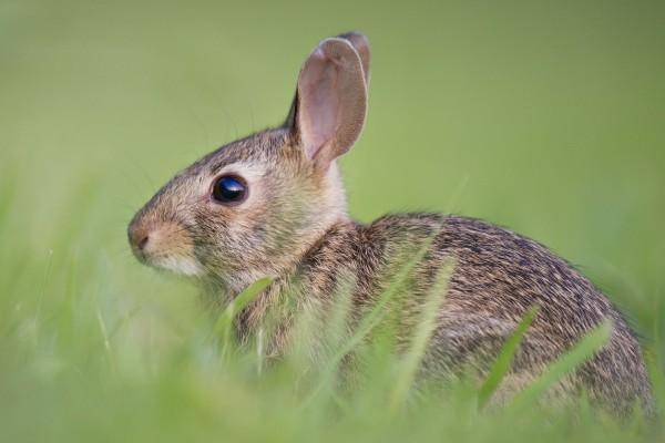 Conejos sepultados vivos por riesgos en las vías férreas