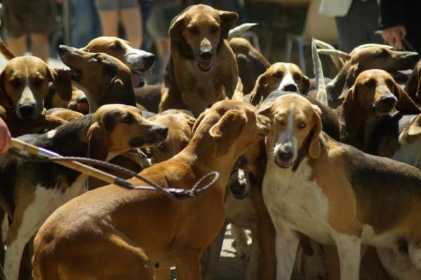 Diversas entidades piden actuar contra el maltrato animal tras la temporada de caza