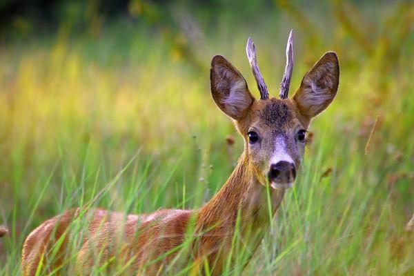 La caza no ayuda a mantener el equilibro ecológico