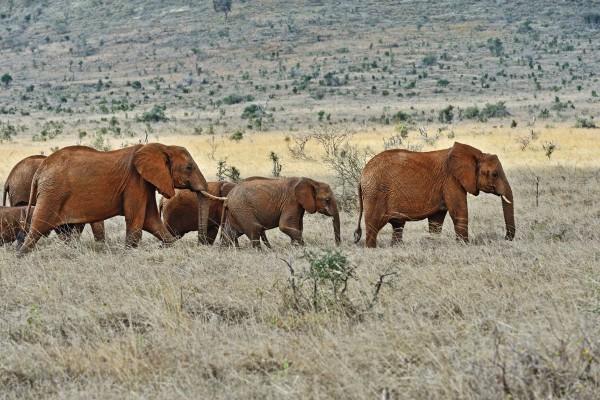 La ONU aprueba la prohibición de la venta de elefantes a zoológicos