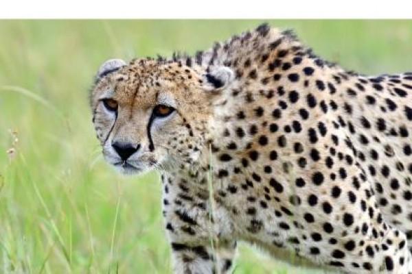 Comercio y explotación de animales salvajes