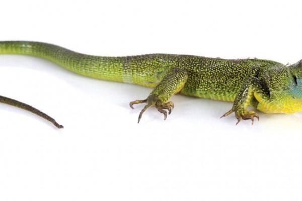 Alerta sobre el comercio ilegal de reptiles, tortugas y aves en España