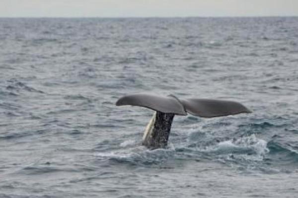 El Pleno del Parlamento Europeo pide a Noruega que detenga la caza de ballenas.