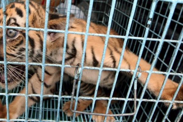 Conervacionistas reclaman medidas más contundentes para frenar el tráfico de especies